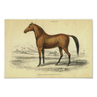 ヴィンテージの馬のプリントFilley プリント