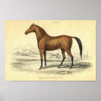 ヴィンテージの馬のプリントFilley ポスター
