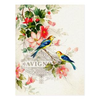 ヴィンテージの鳥のフランス風 ポストカード