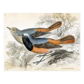 ヴィンテージの鳥07 ポストカード