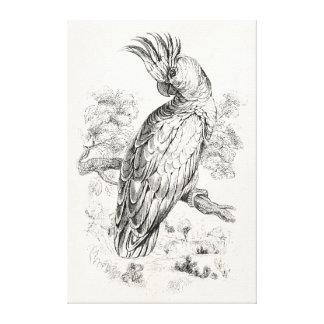 ヴィンテージの19世紀のオカメインコの鳥のCockatielの鳥 キャンバスプリント
