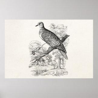 ヴィンテージの19世紀のカメの鳩の鳥の鳩ハト鳥 ポスター