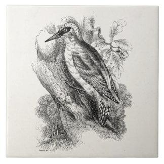 ヴィンテージの19世紀のキツツキの鳥の木製のキツツキの鳥 タイル