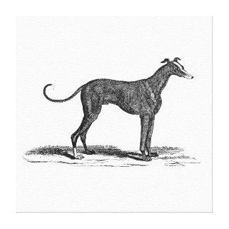 ヴィンテージの19世紀のグレイハウンド犬のイラストレーション-犬 キャンバスプリント
