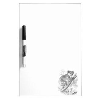 ヴィンテージの19世紀のコアラのイラストレーションはコアラに耐えます ホワイトボード