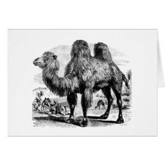 ヴィンテージの19世紀のラクダ-エジプトのラクダのテンプレート カード