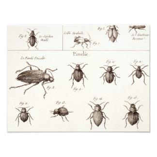 ヴィンテージの19世紀の昆虫の虫のカブトムシのイラストレーション フォトプリント