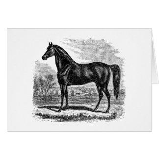ヴィンテージの19世紀の馬-モーガンの騎手のテンプレート カード