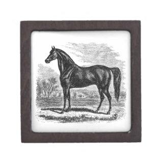 ヴィンテージの19世紀の馬-モーガンの騎手のテンプレート ギフトボックス