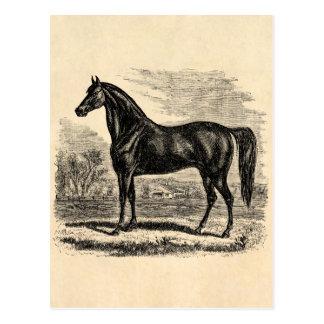 ヴィンテージの19世紀の馬-モーガンの騎手のテンプレート ポストカード