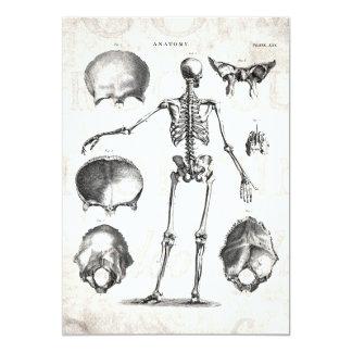 ヴィンテージの19世紀の骨組旧式な解剖学の骨組 カード