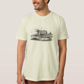 ヴィンテージの19世紀のMerinoヒツジの雌ヒツジの子ヒツジのテンプレート Tシャツ