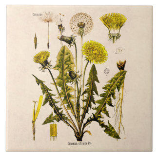 ヴィンテージの19世紀は花柄を播くために行くタンポポを黄色にします タイル