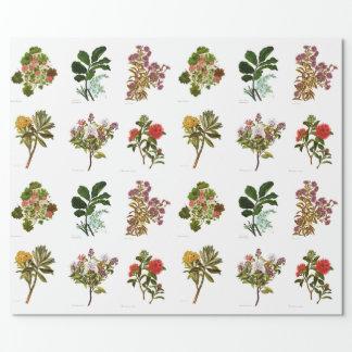 ヴィンテージ科学NZの花 ラッピングペーパー