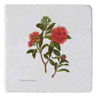 ヴィンテージ科学NZの花- Meterosiderosフロリダ トリベット