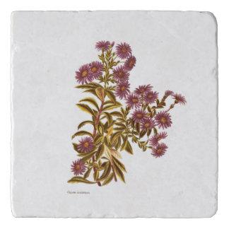 ヴィンテージ科学NZの花- Oleariaのsemidentata トリベット
