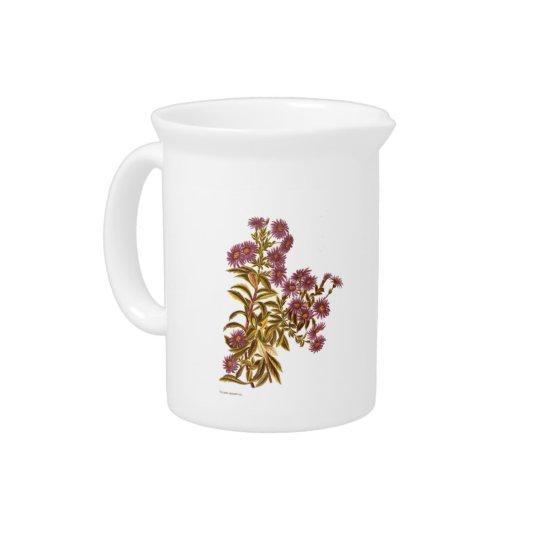 ヴィンテージ科学NZの花- Oleariaのsemidentata ピッチャー