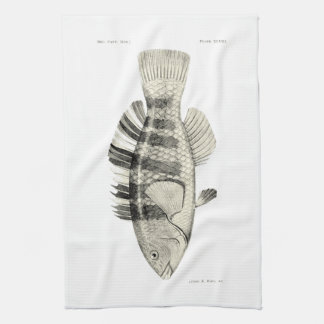 ヴィンテージ科学NZの魚-バンドを付けられたオウムの魚 キッチンタオル
