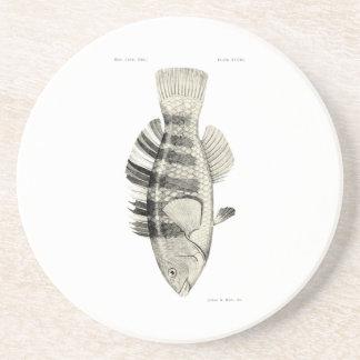 ヴィンテージ科学NZの魚-バンドを付けられたオウムの魚 コースター