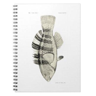 ヴィンテージ科学NZの魚-バンドを付けられたオウムの魚 ノートブック