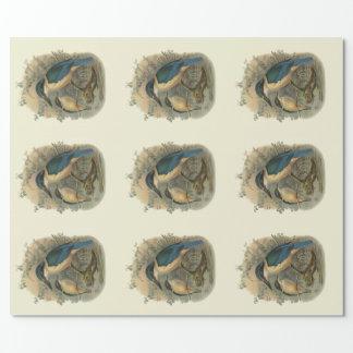 ヴィンテージ科学NZの鳥-カワセミ ラッピングペーパー
