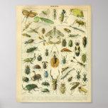 ヴィンテージ色の昆虫の芸術のプリント ポスター