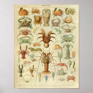 ヴィンテージ色の海洋生物の芸術のプリント ポスター