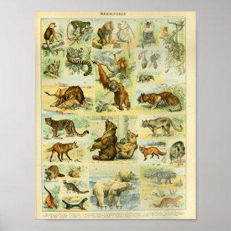 ヴィンテージ色の野性生物のほ乳類のプリント ポスター