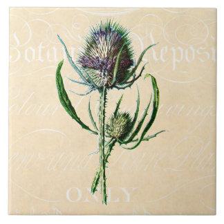 ヴィンテージ1902のスコットランド人のアザミのアンティークの野生の花 タイル