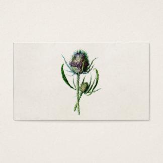 ヴィンテージ1902の古いスコットランドのアザミの野生花 名刺