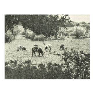 ヴィンテージBas Normandeの牧草地 ポストカード