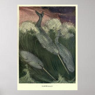 ヴィンテージNarwhal Painting (1909年) ポスター
