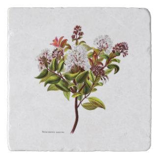 ヴィンテージNZの花- Meterosiderosのalbiflora トリベット