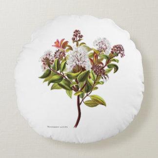 ヴィンテージNZの花- Meterosiderosのalbiflora ラウンドクッション