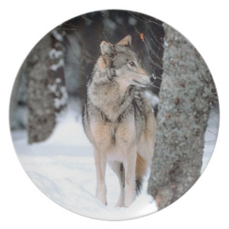 一匹狼の野性生物の写真撮影のプレート プレート