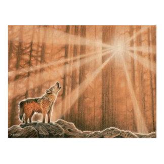 一匹狼 ポストカード