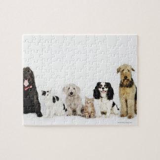 一緒に坐っている猫および犬のポートレート ジグソーパズル