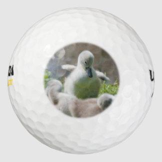 一緒に抱きしめている3羽の赤ん坊の白鳥のCygnetの子ガモ ゴルフボール