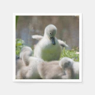 一緒に抱きしめている3羽の赤ん坊の白鳥のCygnetの子ガモ スタンダードカクテルナプキン