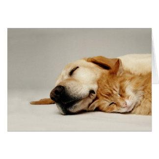 一緒に眠っている猫および犬… グリーティングカード