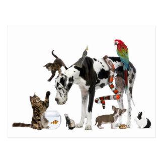 一緒の甘い動物 ポストカード