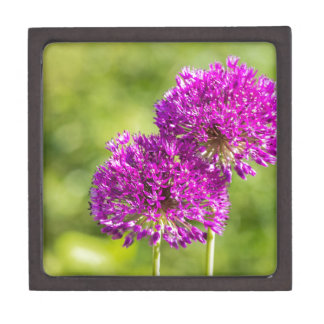 一緒の装飾用のタマネギの2つの紫色の花 ギフトボックス