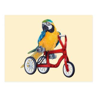 三輪車のバイクのオウムのコンゴウインコ ポストカード