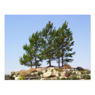 上の木 ポストカード