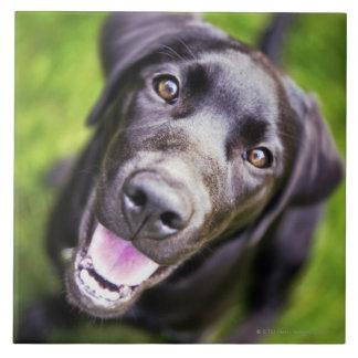 上向きに見ているラブラドルの黒い子犬クローズアップ タイル