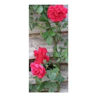 上昇のバラの茂み ラックカード