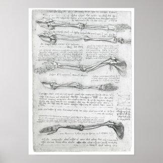 上肢、レオナルド・ダ・ヴィンチ ポスター