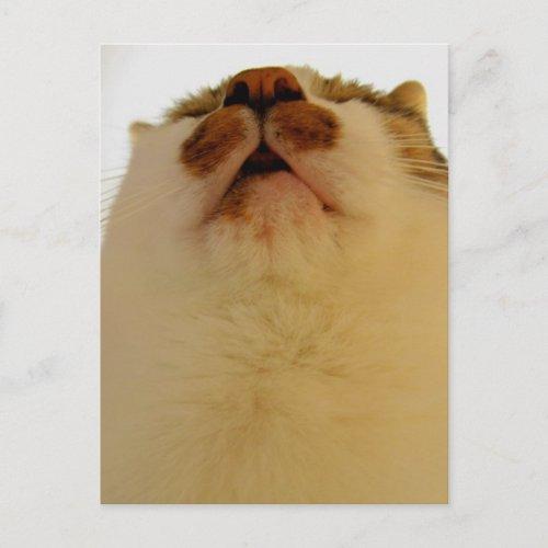 下から zazzle_postcard