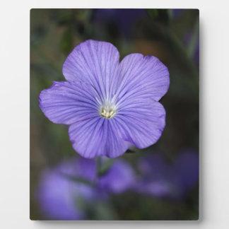 不断か青い亜麻の花 フォトプラーク