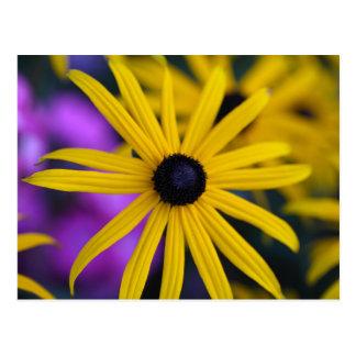 不断のconeflower (ルドベキアのfulgida) ポストカード